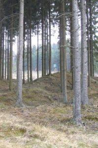 Wanderung von Rodt (Skihütte) durch den Emmelser Wald nach Schlommenfurt
