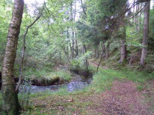 Wanderung von Rocherath ins Jansbachtal