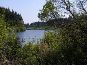 Wanderung von Berg um den Stausee und nach Bütgenbach